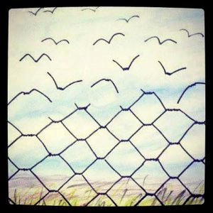 border-fence-becoming-birds
